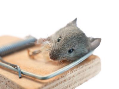ネズミ 駆除 口コミ